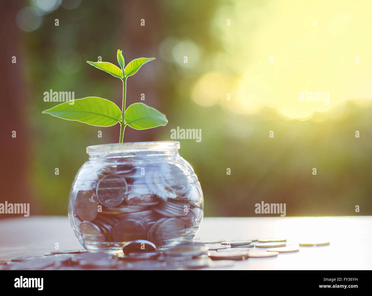 Sprout growing on glass piggy bank with sunset light in saving money concept - Stock Image