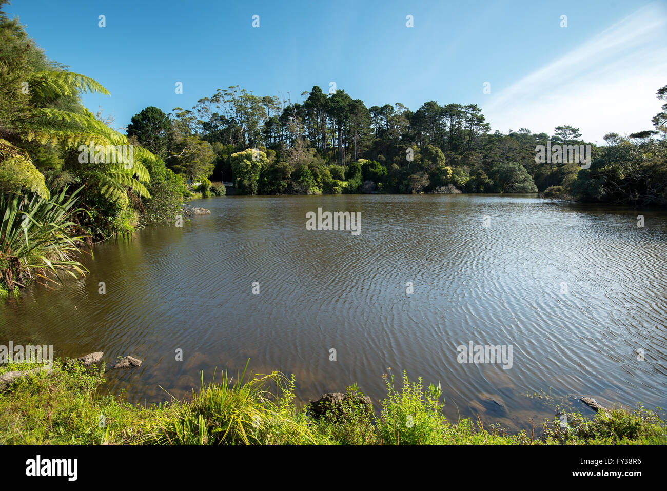 Lake surrounded  by native bush.  Chelsea Park in Auckland, New Zealand - Stock Image