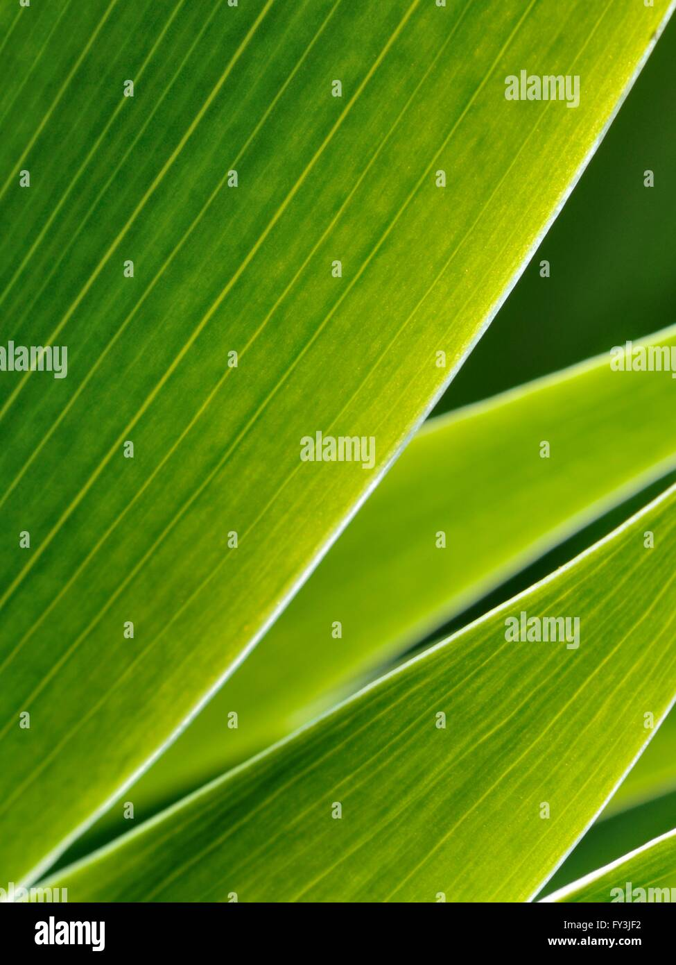 Green Leafs In Abstract Zen Style As Background Stock Photo 102727942 Alamy