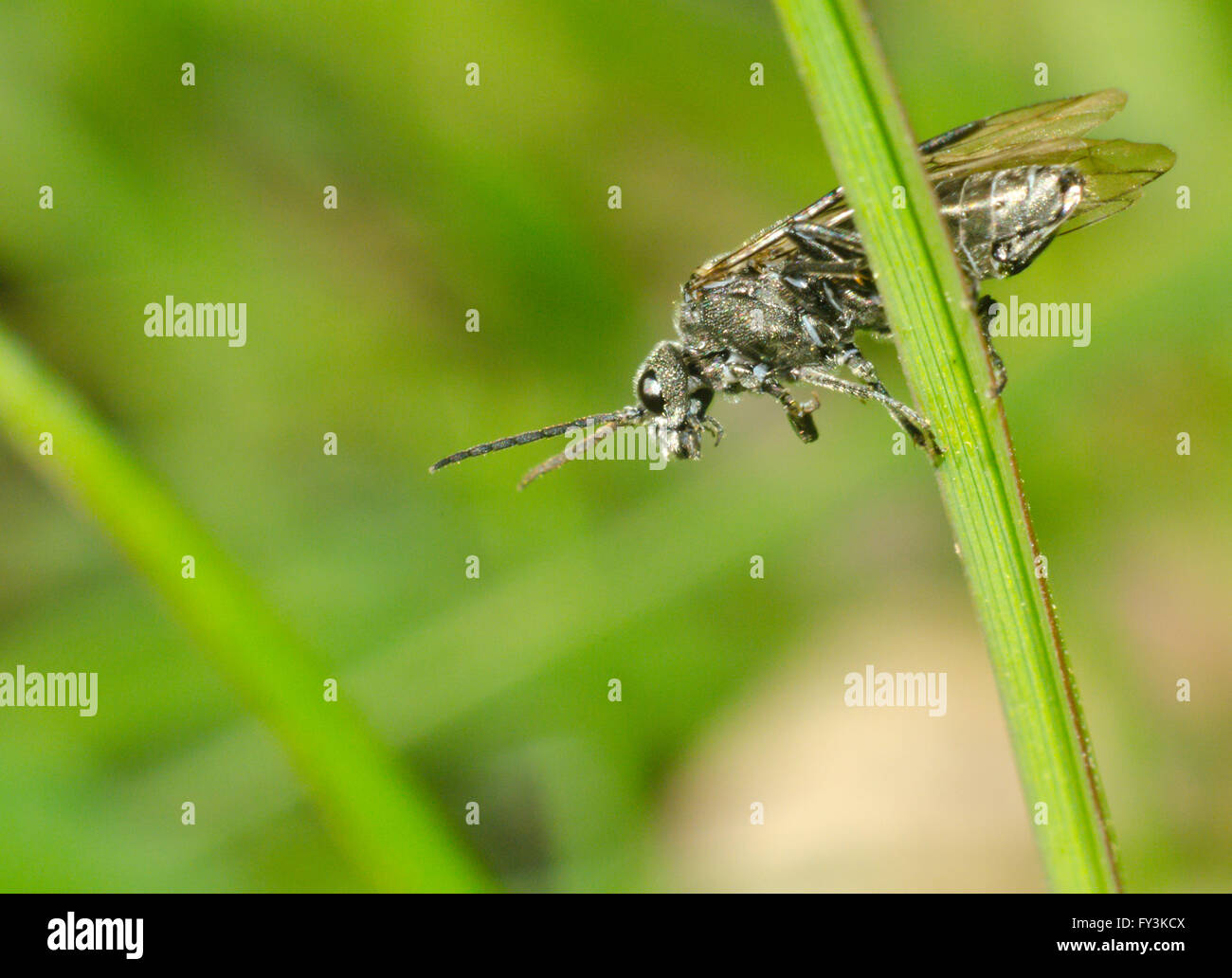 Fly sitting on grass Stock Photo