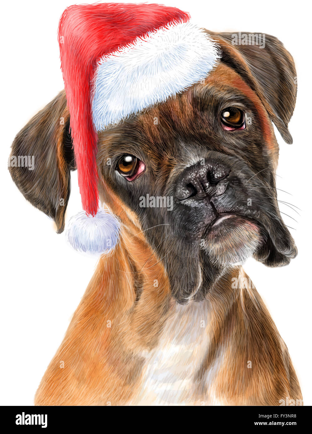 Boxer Dog Hat High Resolution Stock
