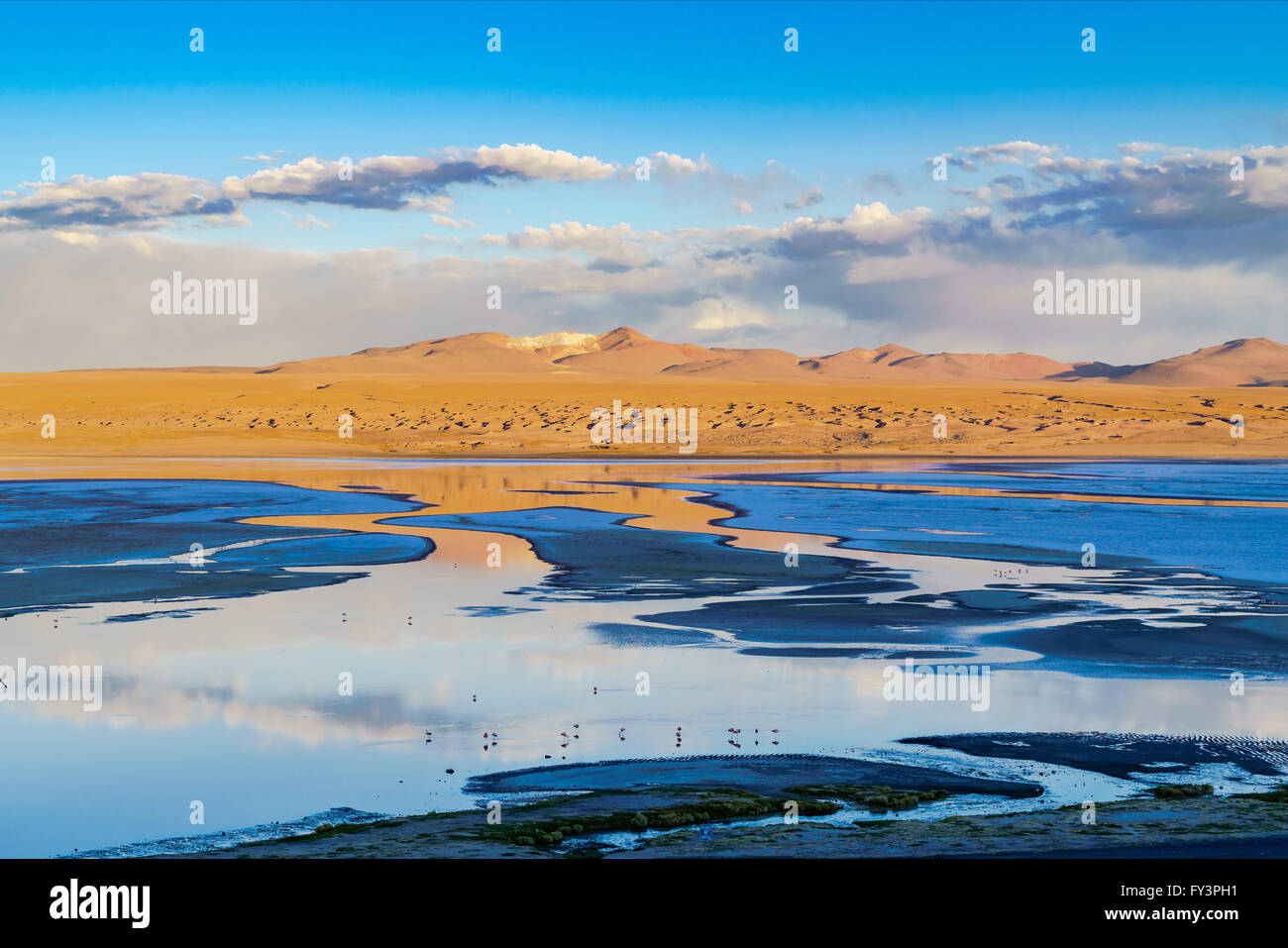 View of laguna in the evening at The Reserva Nacional De Fauna Andina Edina Eduardo Avaroa, Potasi, Bolivia - Stock Image