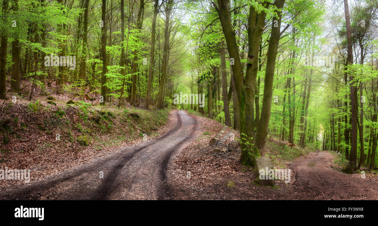 Bobbel Colour play of the forest path