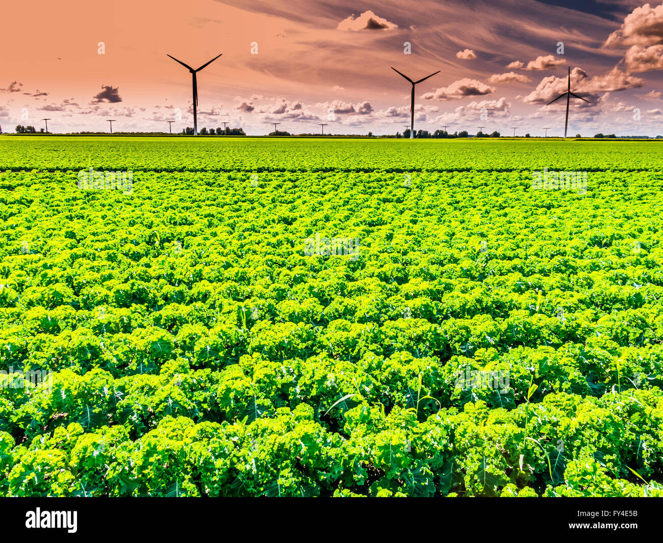 Farmland and wind turbines in Flevoland polder, the Netherlands - Stock Image