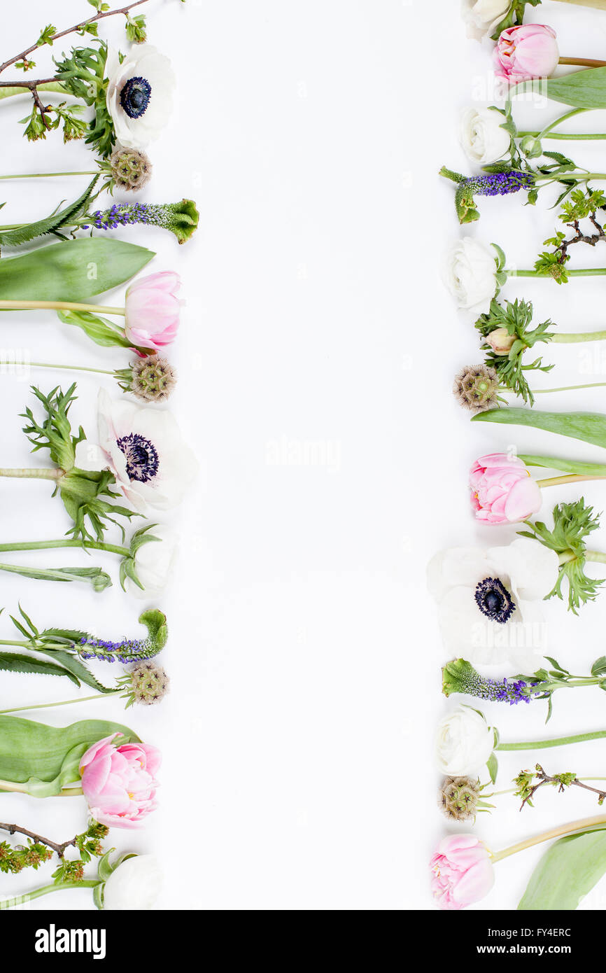 Pink tulips, white anemones, pink cloves and white buttercups lying on white background in two rows, left side and Stock Photo