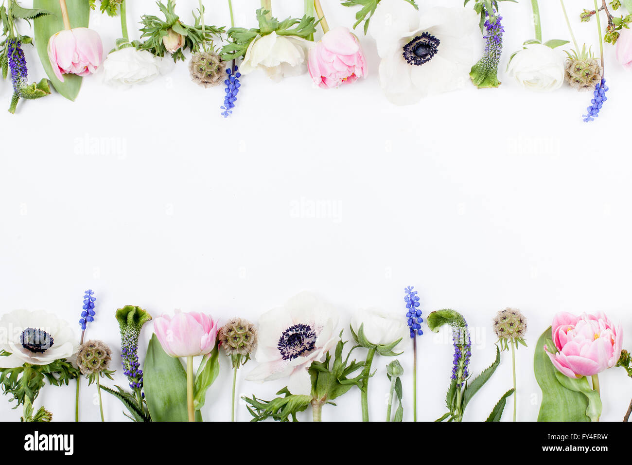Pink tulips, white anemones, pink cloves and white buttercups lying on white background in two rows, on top and Stock Photo