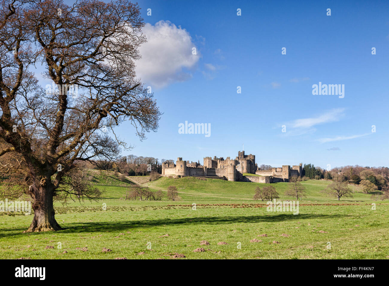Spring at Alnwick Castle, Northumberland, England, UK - Stock Image