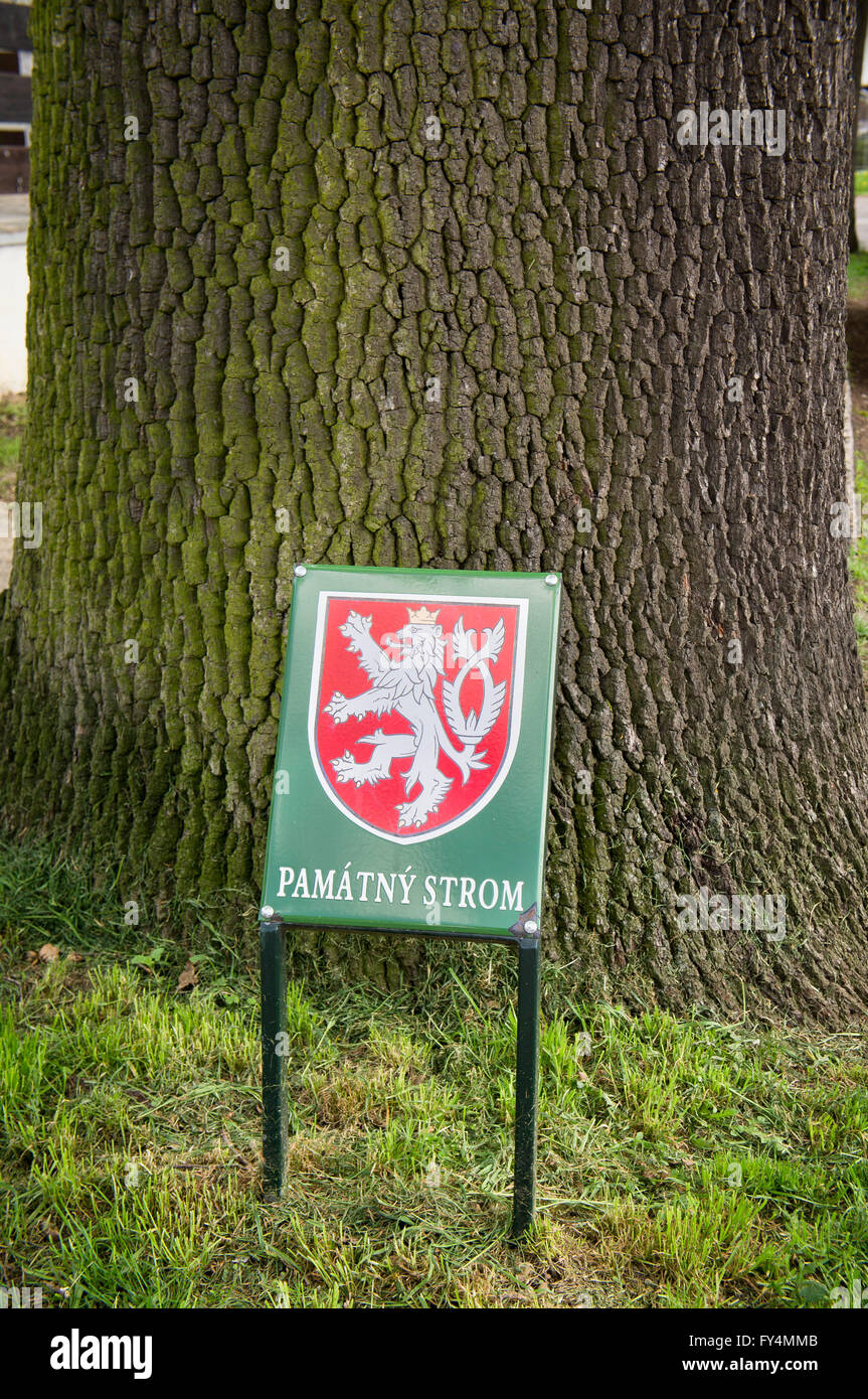 Quercus robur, pedunculate oak, SIGNIFICANT TREE sign - Stock Image