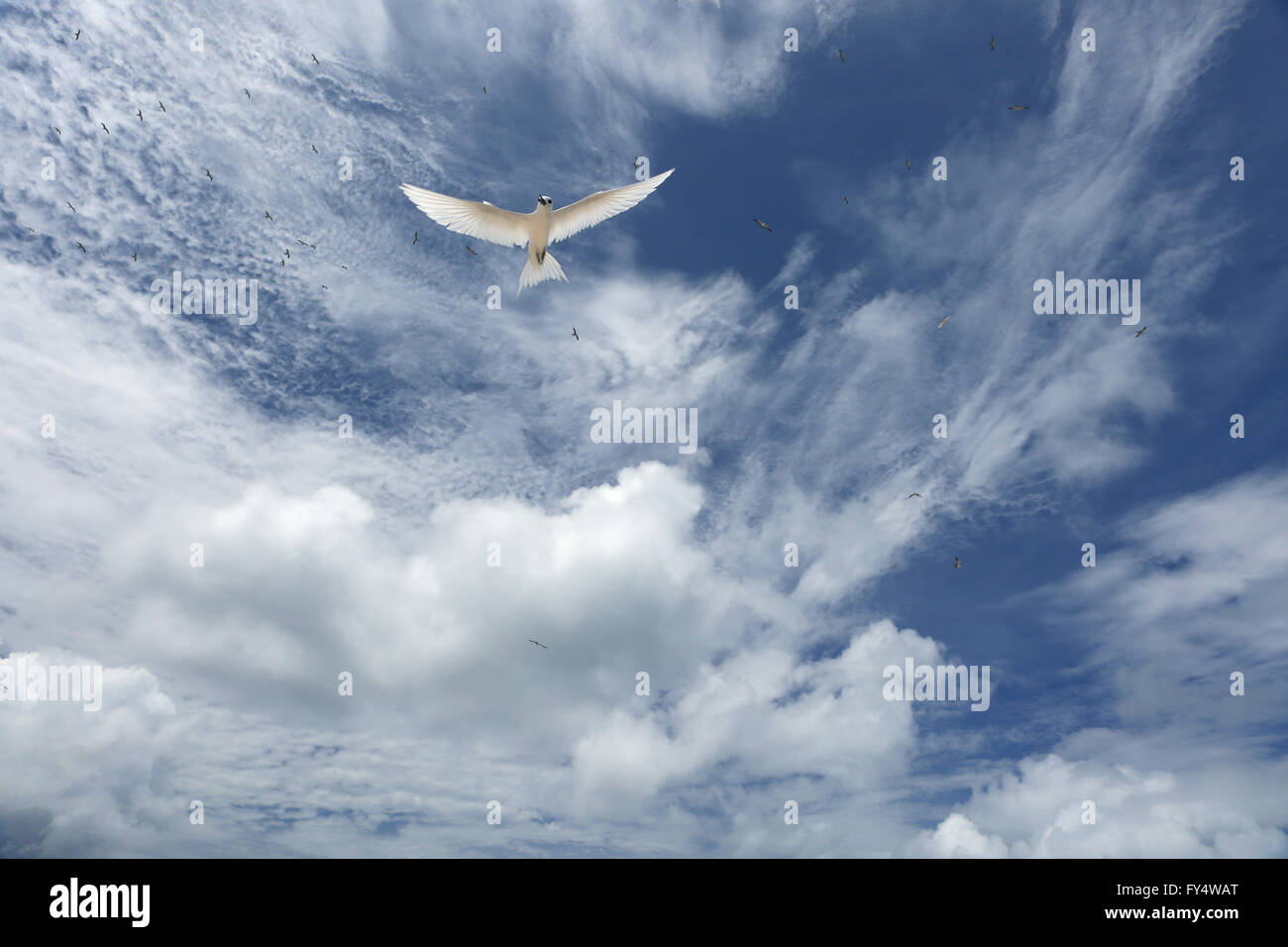 White, fluffy clouds and white fairy tern bird in the blue sky - Stock Image
