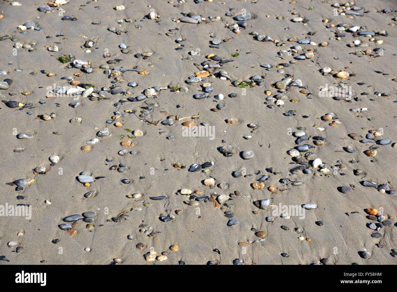 Pebble rocks in the sand.  Background, texture. - Stock Image