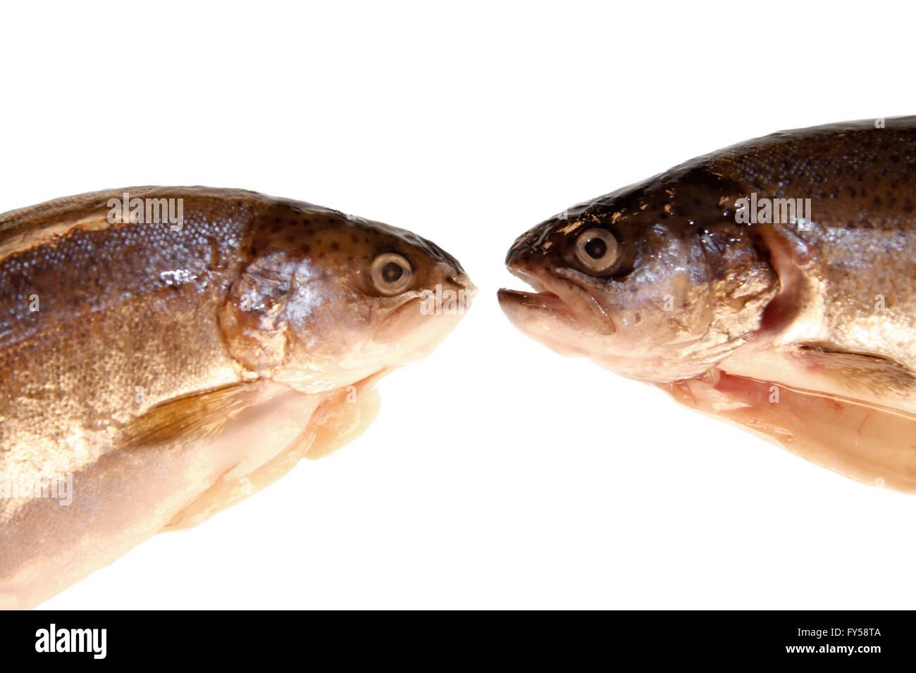 Forellen: Fische - Symbolbild Nahrungsmittel. - Stock Image