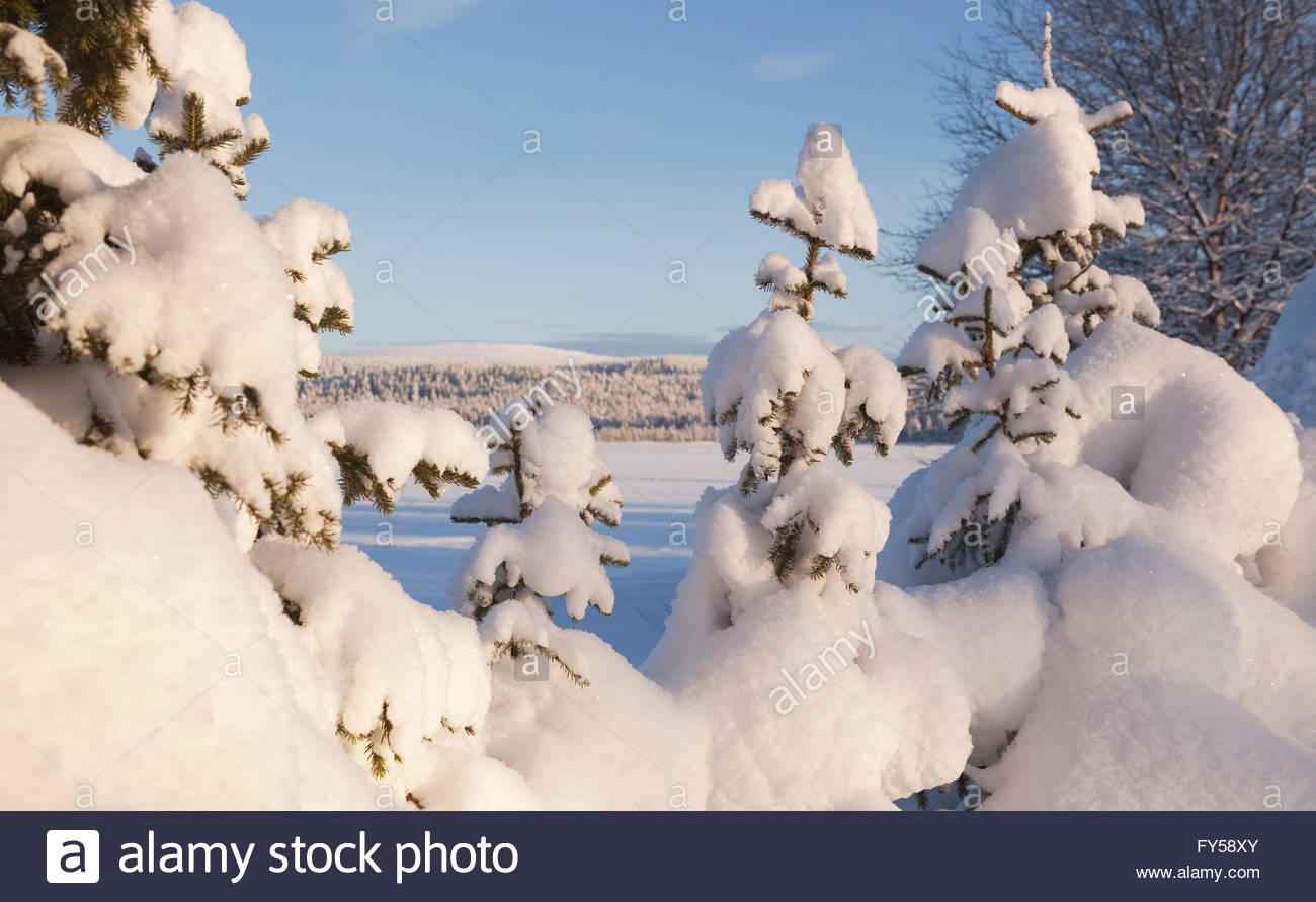Snowy fir trees, lake and fell in Finnish Lapland - Stock Image