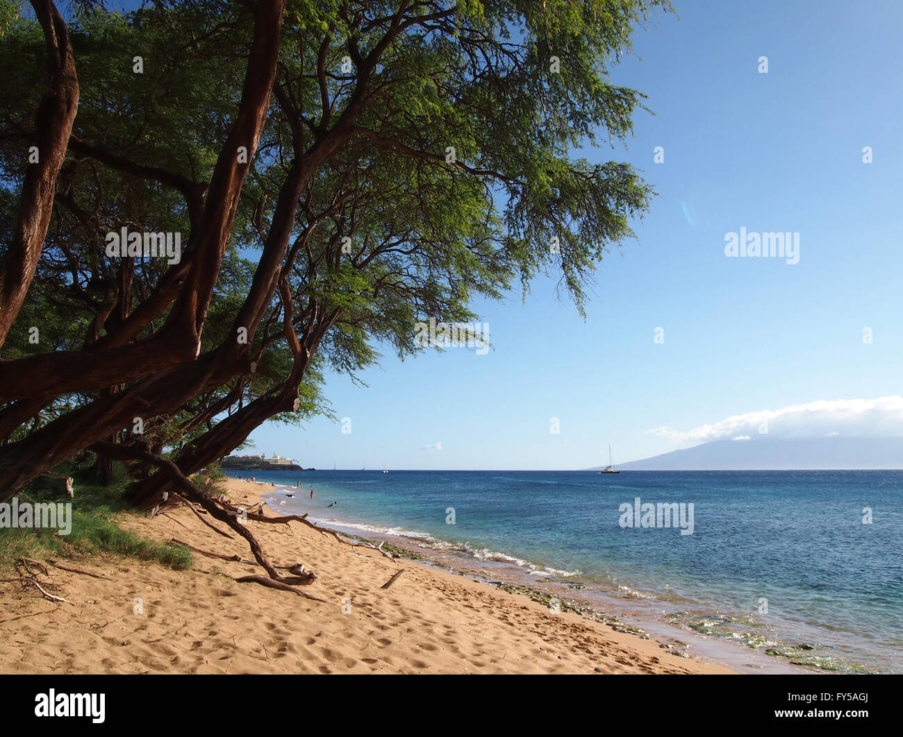 Kaanapali Beach with gentle waves and tall rugged trees. Boat and Island of Lanai can be seen in the distance on - Stock Image