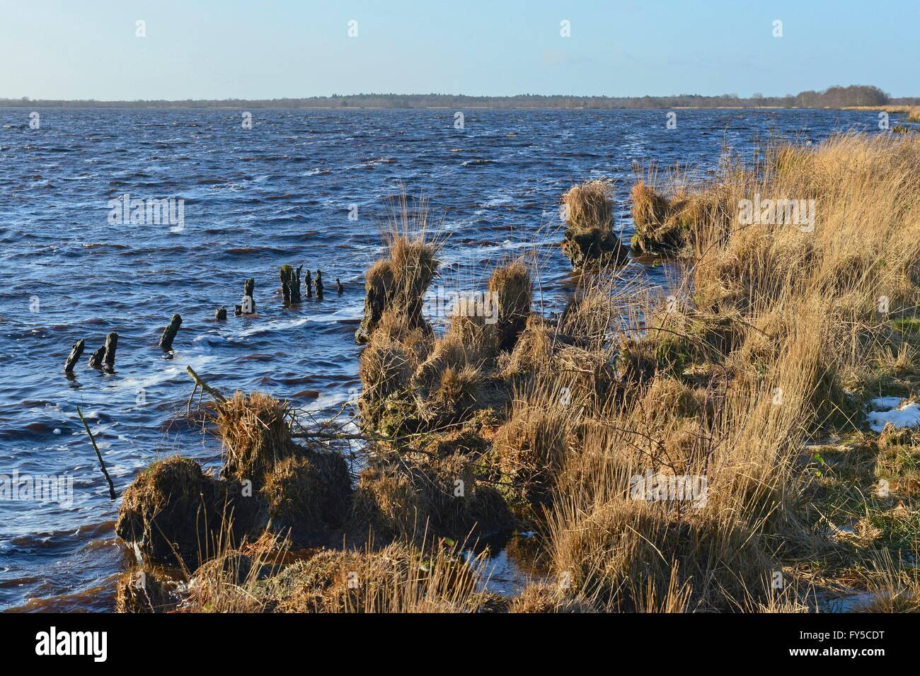 Conservation area with blue water surface of Ewiges Meer with yellow grasses lakeside, 4 December 2015 Stock Photo