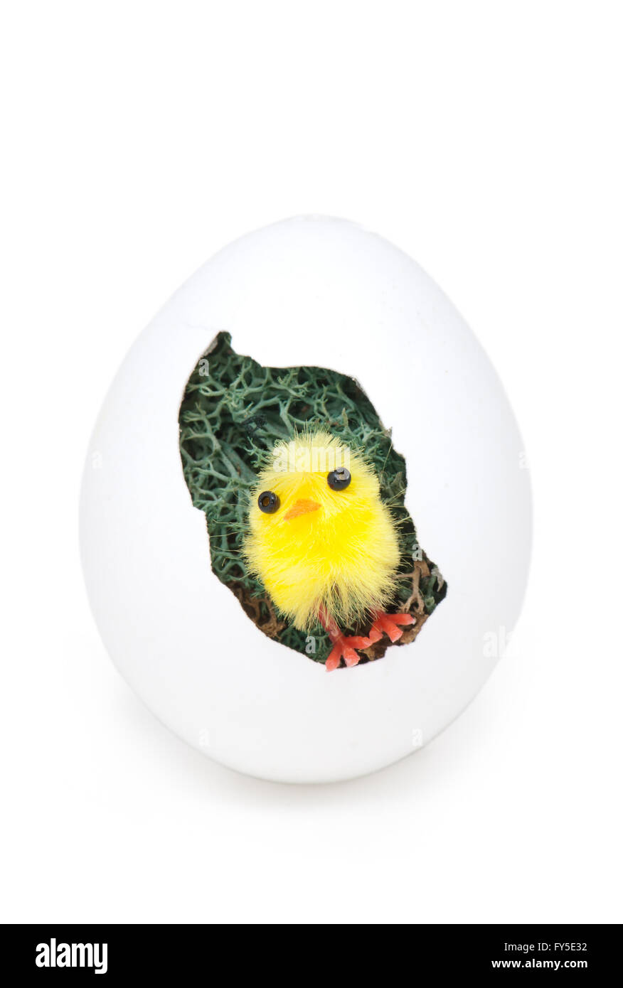 Yellow chick in an Easter egg as an Easter decoration, isolated - Stock Image