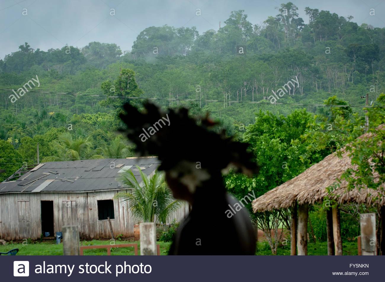 "Lapetanha, Rondonia, Brazil at the ""7th September Indian Reserve"",Rondonia, Brazil. Stock Photo"