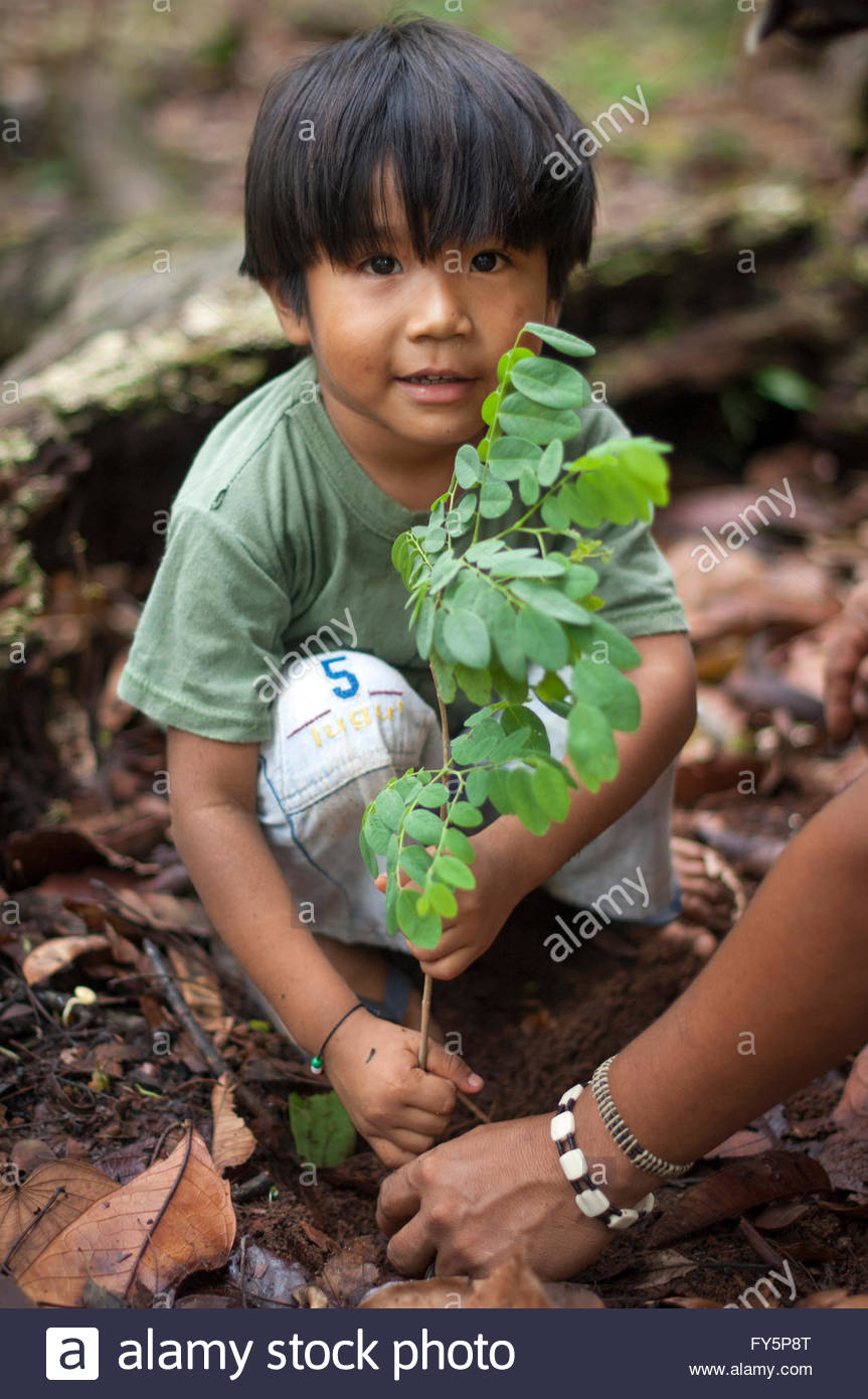 A young Surui plants a new tree at the '7th September Indian Reserve' Rondonia, Brazil. - Stock Image