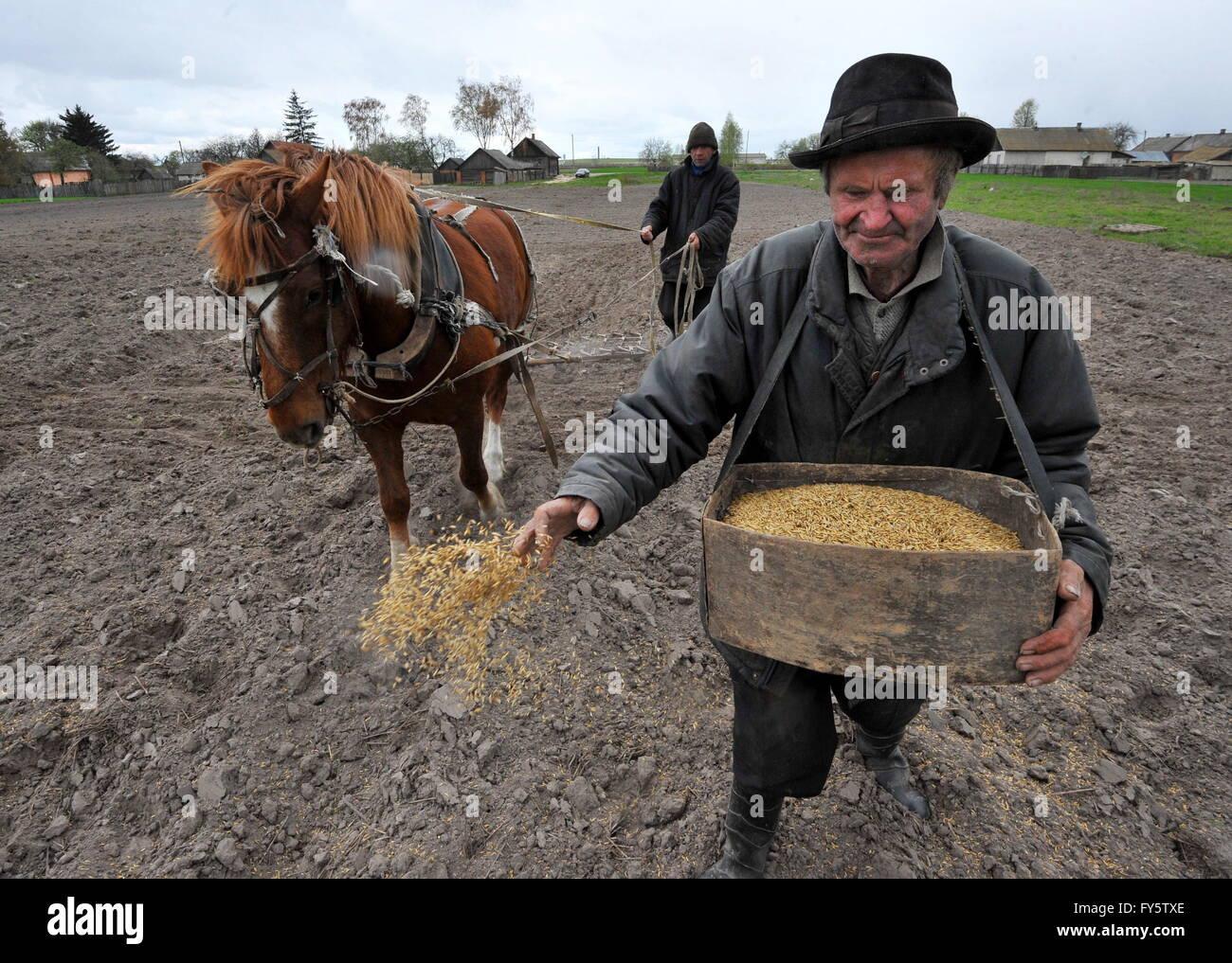 Gomel Region, Belarus. 22nd Apr, 2016. Agricultural works in the village of Novoselki, Khoiniksky District, located - Stock Image