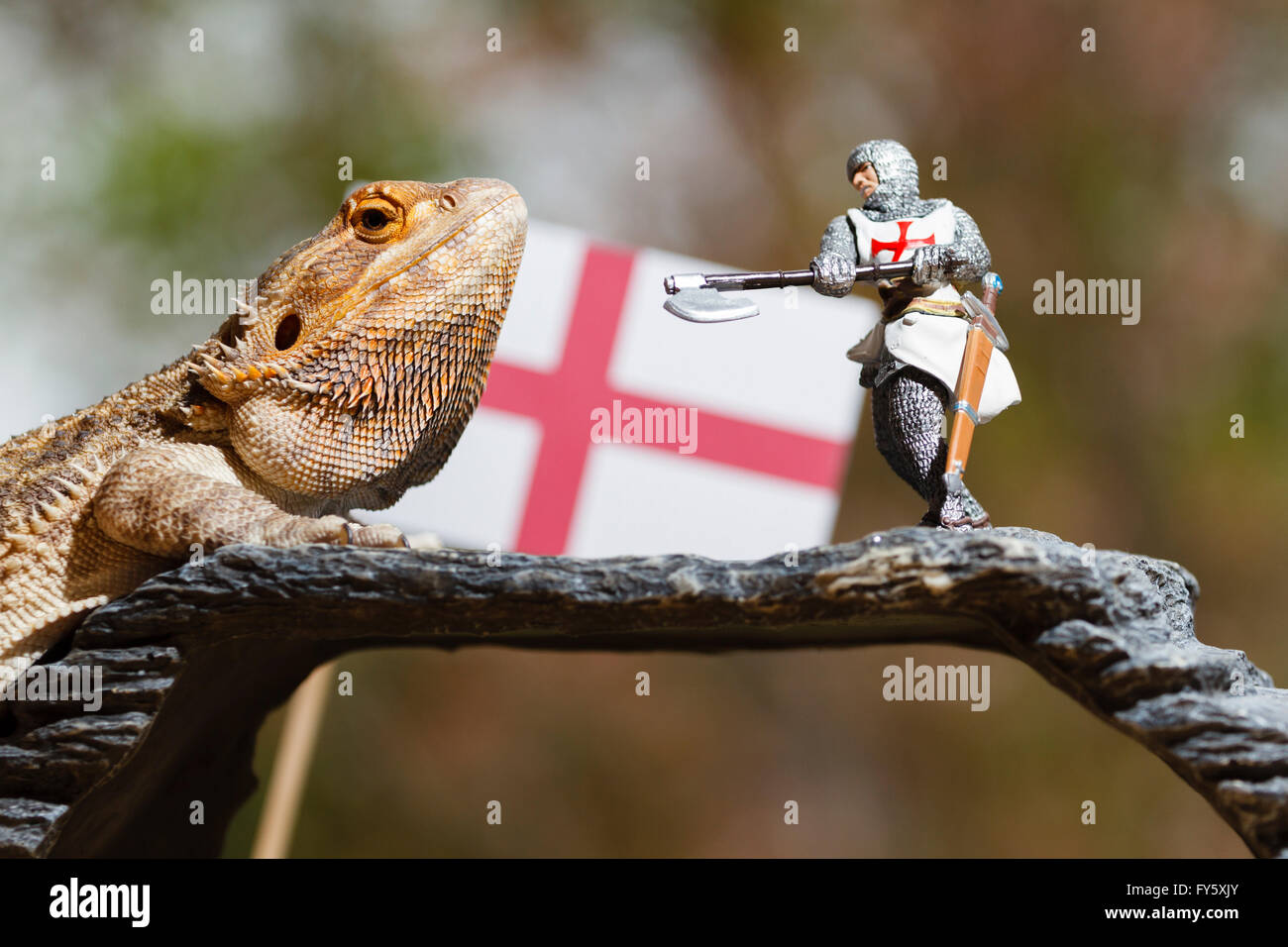22nd April 2016.  As St. George's Day approaches, dragons across the country prepare to disrupt England's national - Stock Image