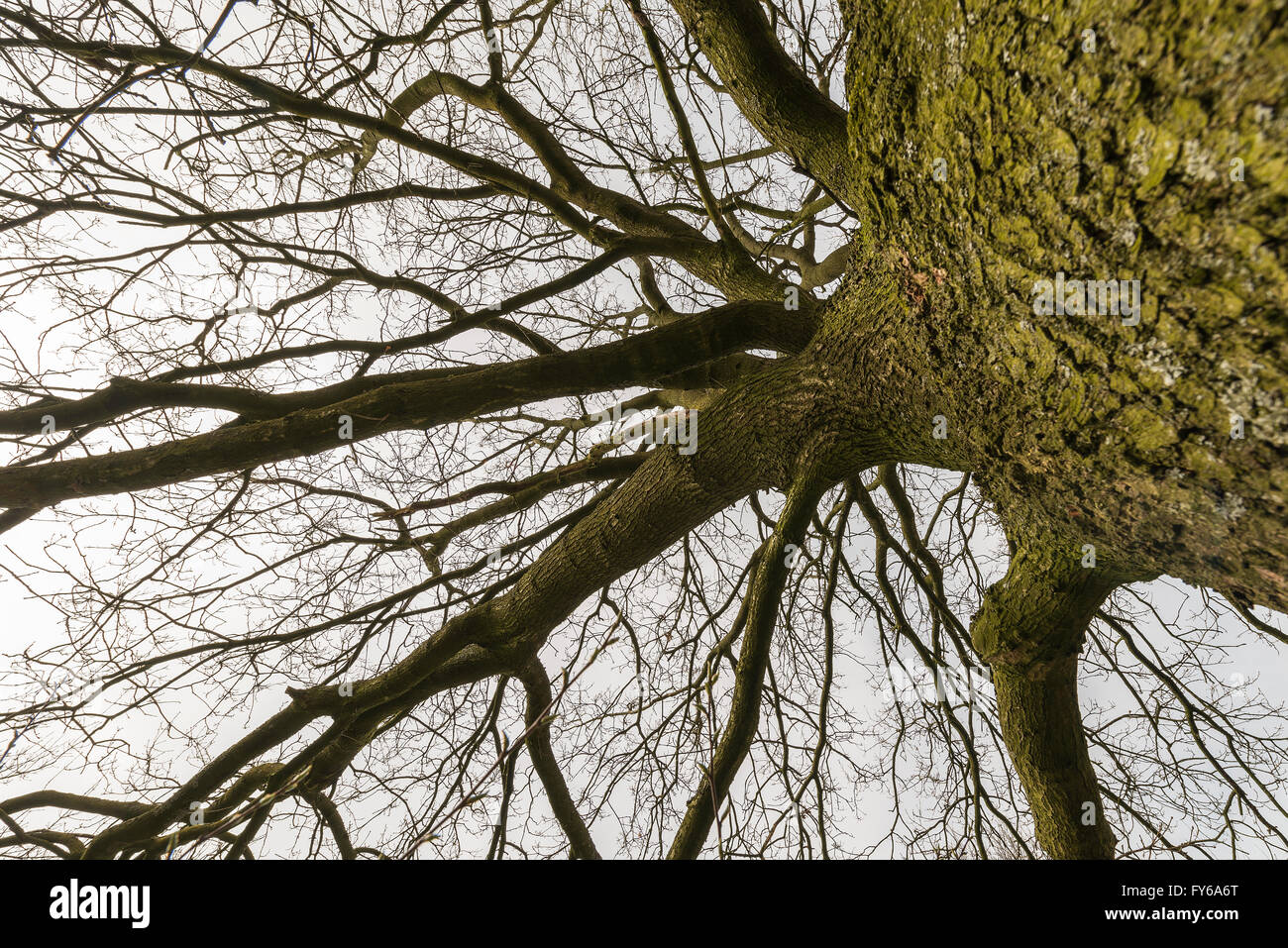Tree outline with branches and sky in the background - Stock Image