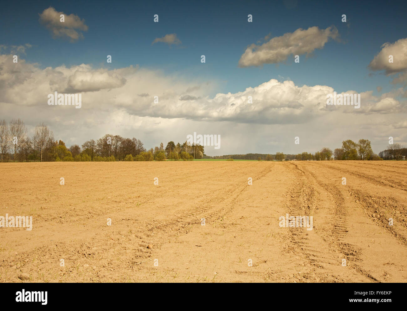 Poland,Podlaskie region in april. Rural landscape with the field ready to plow and beautiful blue sky with white - Stock Image