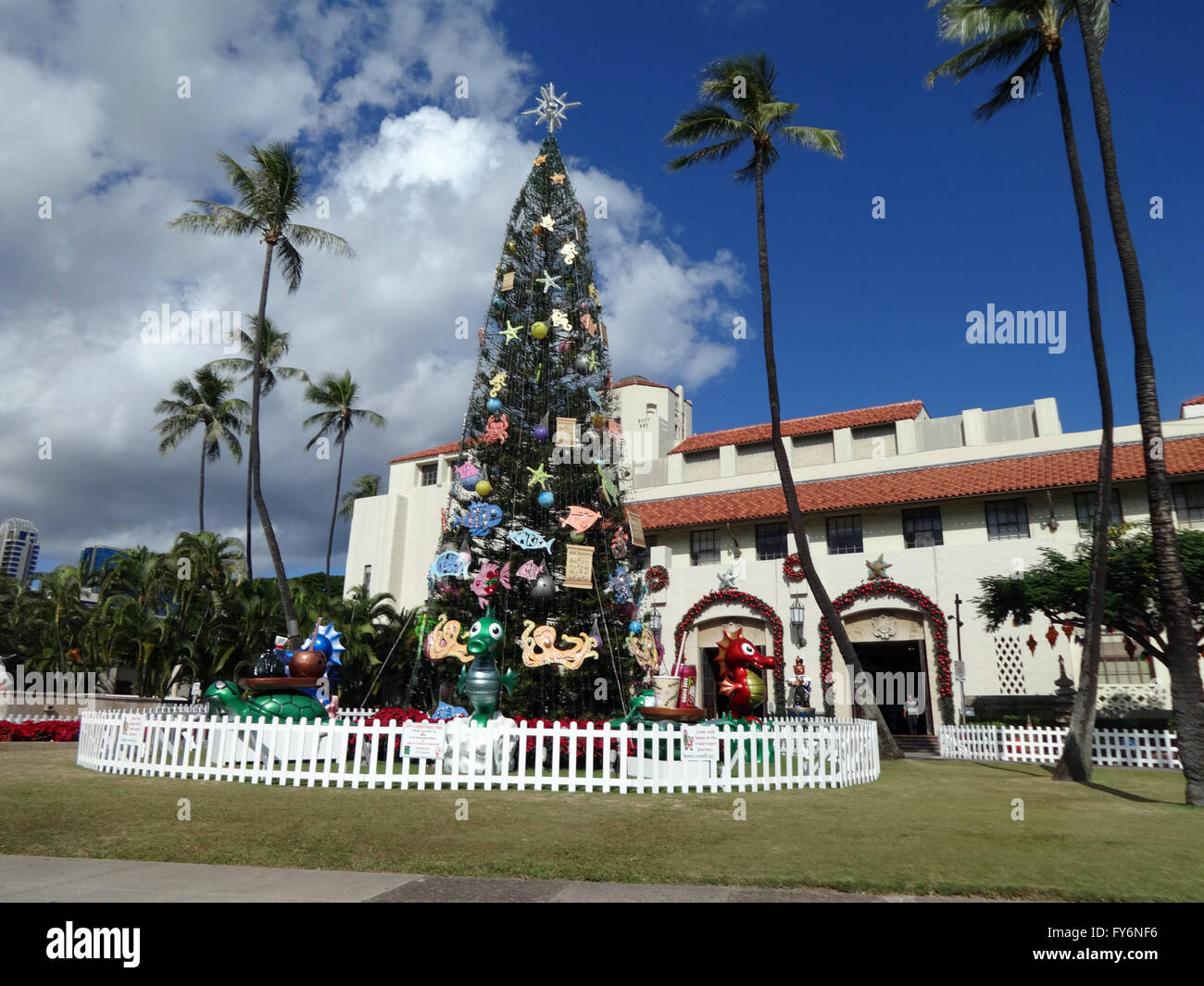 HONOLULU - DECEMBER 16, 2013: 50-foot Norfolk pine Christmas Tree in ...