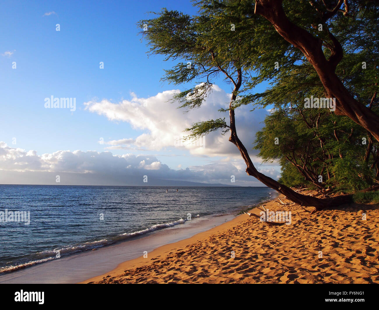 Kaanapali Beach at Dusk with gentle waves and trees. Island of Lanai can be seen in the distance on Maui, Hawaii. - Stock Image