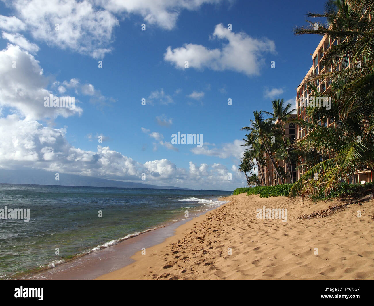 Kaanapali Beach with gentle waves crashing on the sand and Coconut trees, and napaka bushes. Island of Lanai can - Stock Image