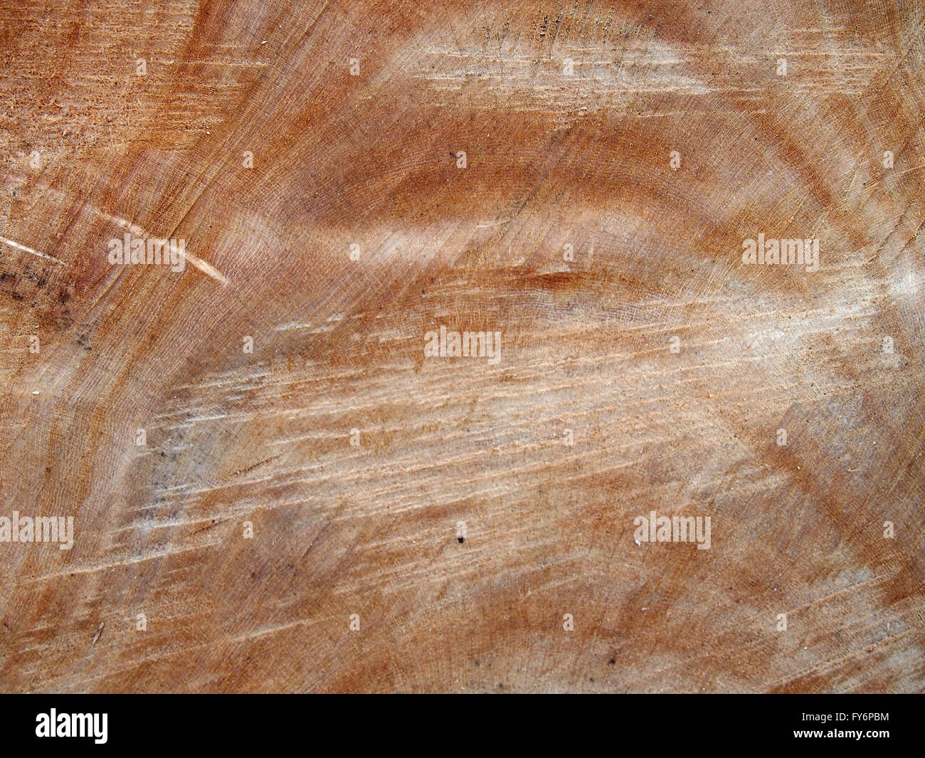 Chainsaw cut tree reddish brown trunk close-up - Stock Image