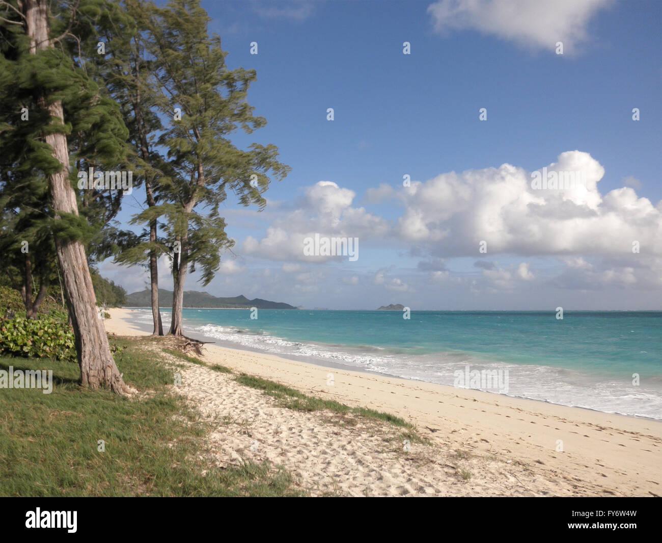 Gentle waves crash on Waimanalo Beach on Oahu, Hawaii.   With Pine Needle trees on the grasses shore. - Stock Image