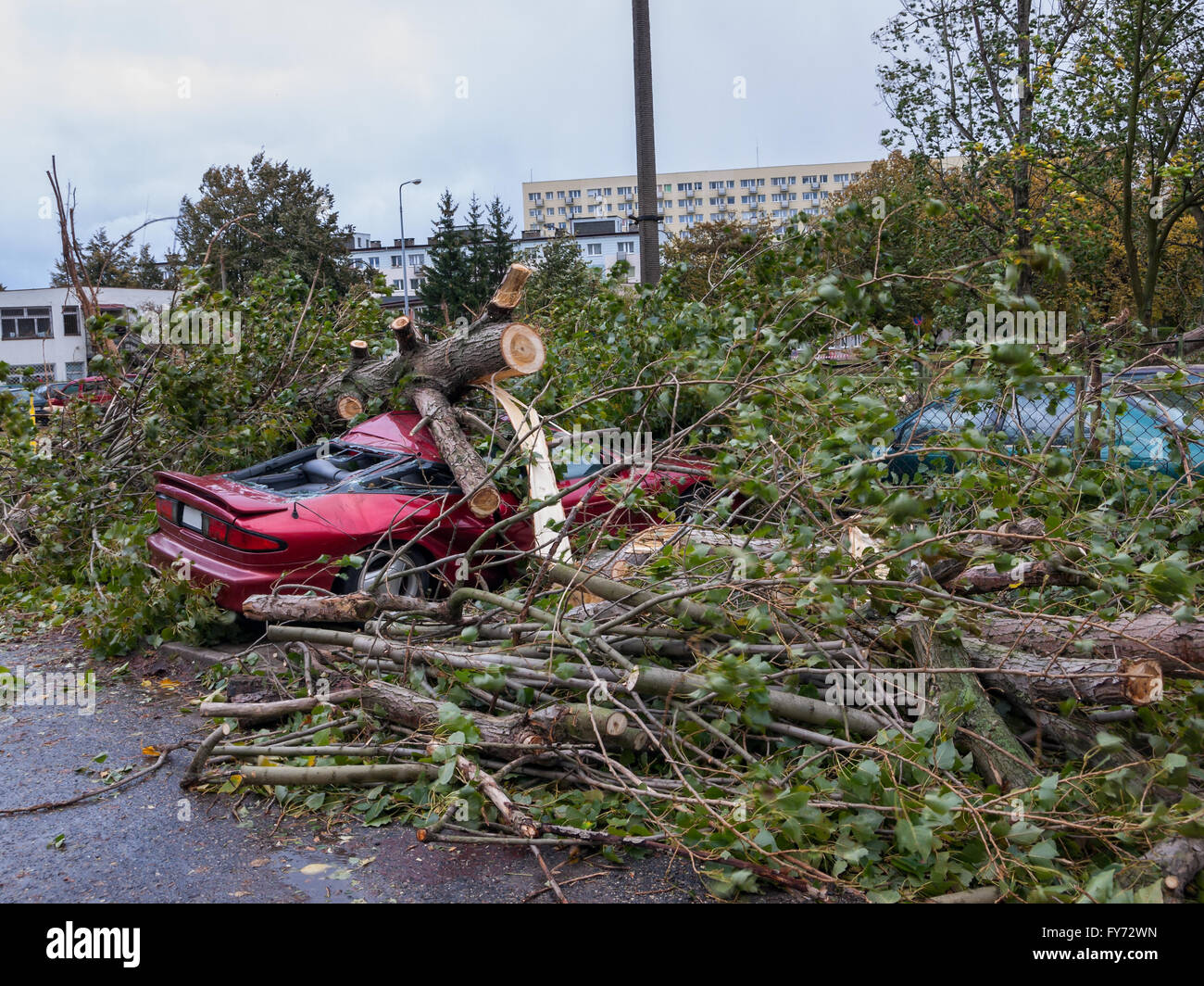 Big tree falls and destroying a parked car. Stock Photo