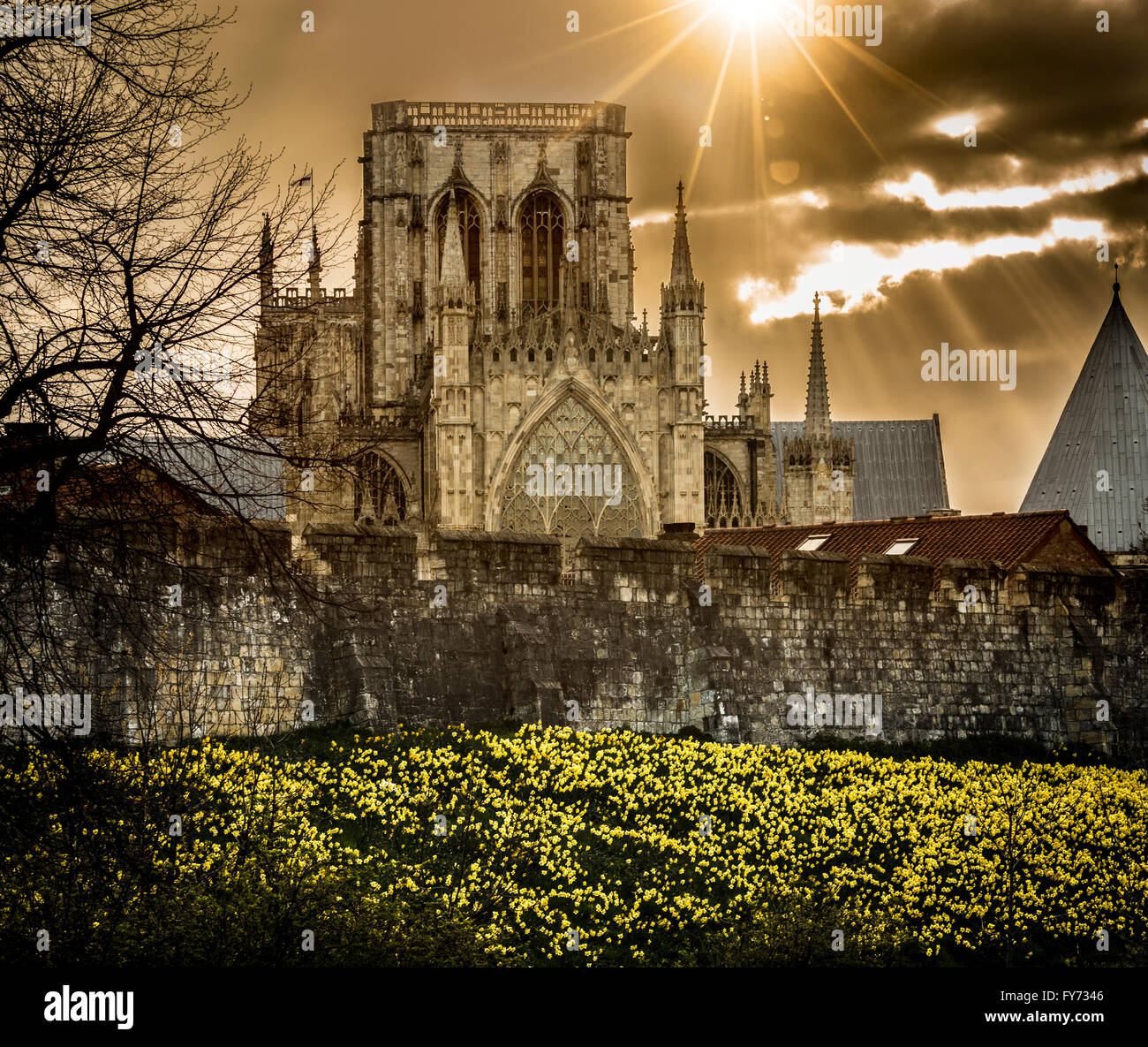 Spring flowering daffodils on th banks of the Bar Walls with York Minster in the background. York, North Yorkshire, - Stock Image