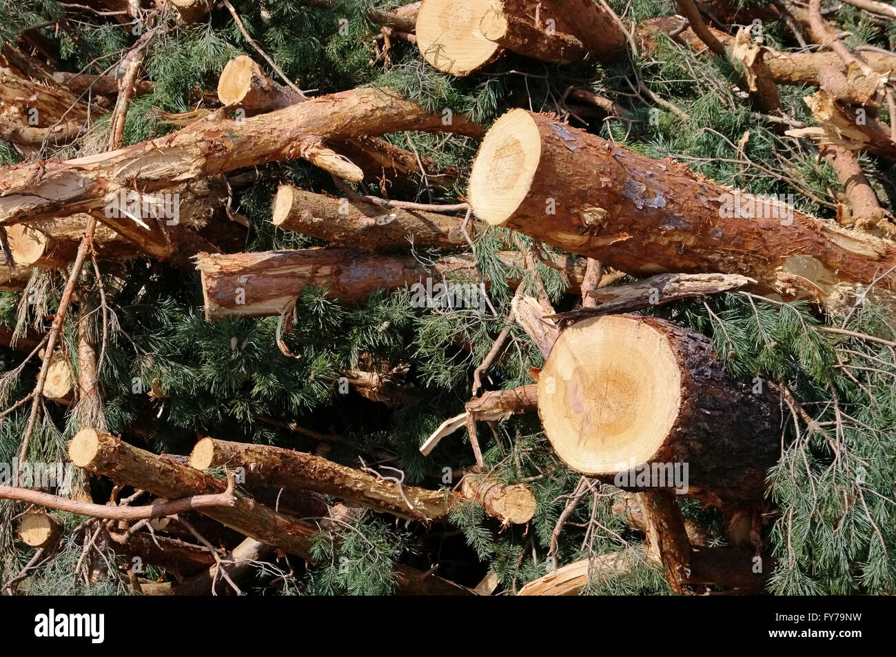 Holzstapel - stack of wood 37 Stock Photo