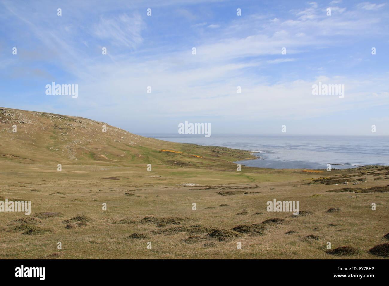 The grasslands of West Point Island, Falkland Islands - Stock Image