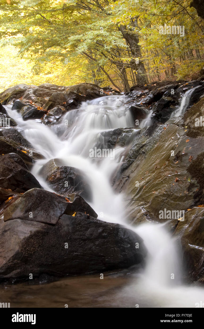 forest stream in autumn with colorful foliage - Stock Image