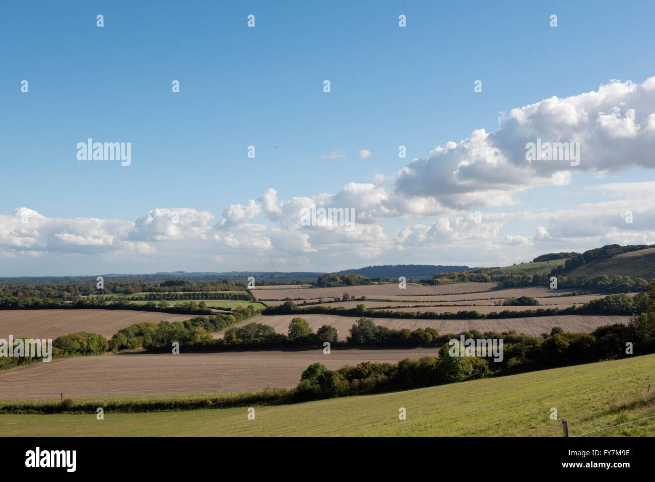 Looking over autumn fields and seedbeds with hedgerows and trees in West Berkshire - Stock Image