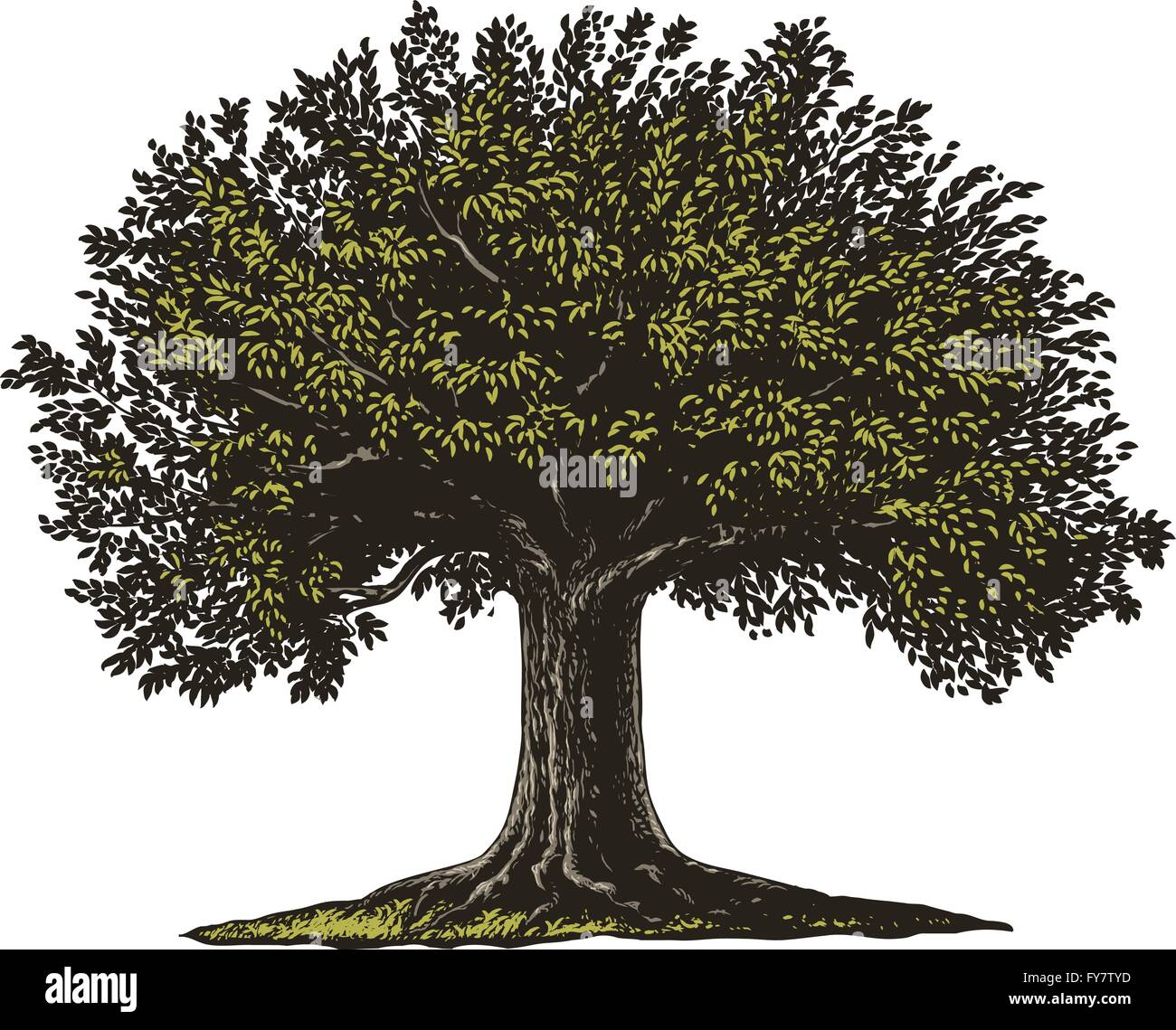 Vector illustration of a fruit tree in vintage engraving style. - Stock Vector