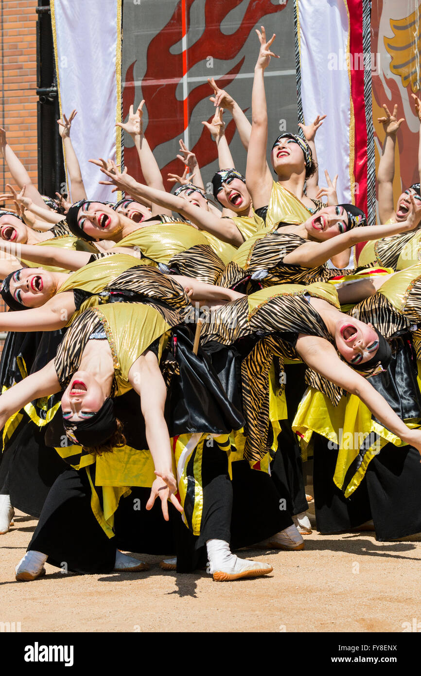 Yosakoi dance festival, Japan. Female dance troupe in black and yellow yukata coats, together in spray formation, - Stock Image