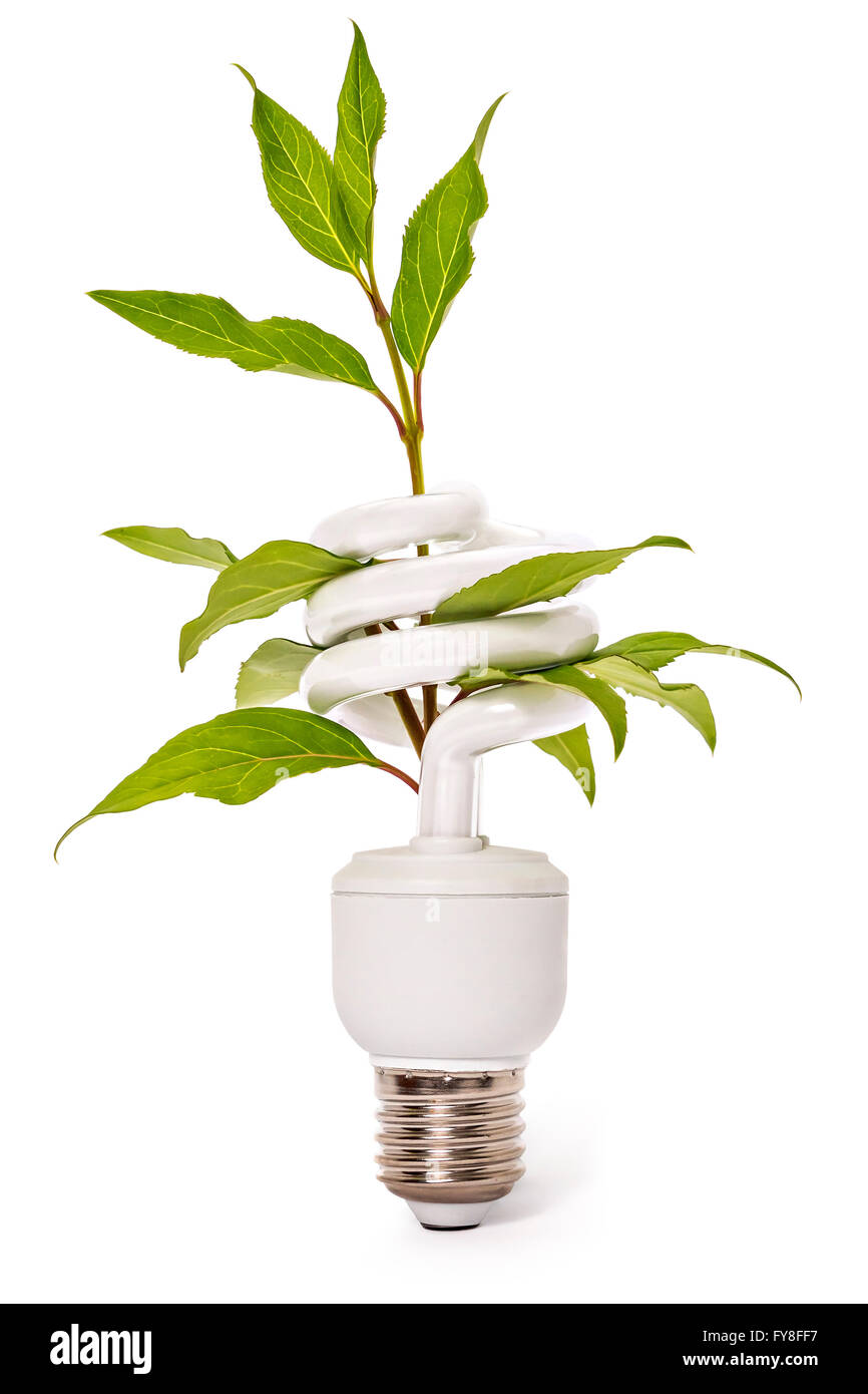 Light bulb and plant - Stock Image