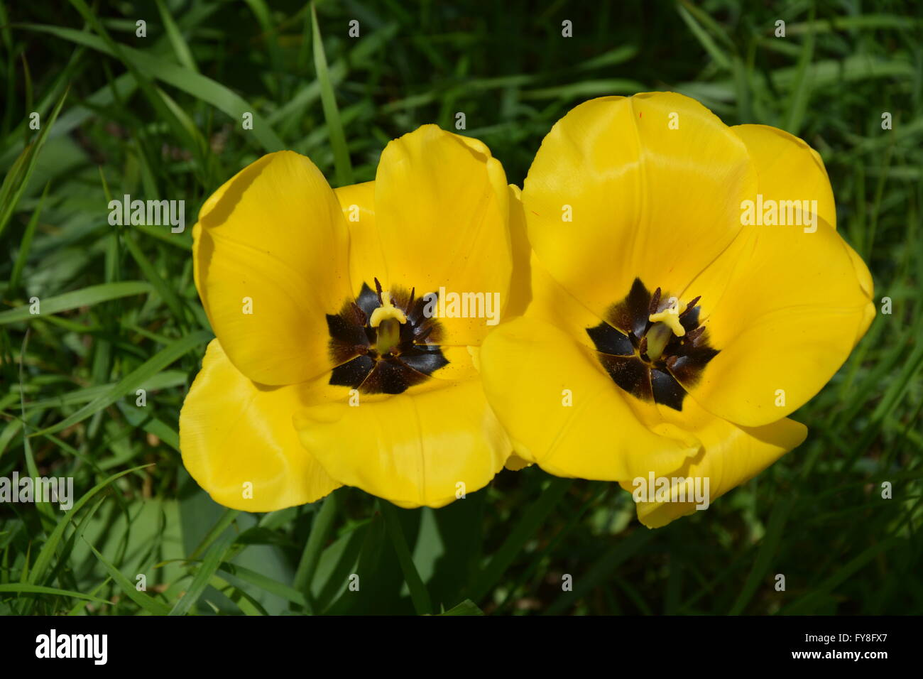 Yellow Flower With Black Center Stock Photos Yellow Flower With