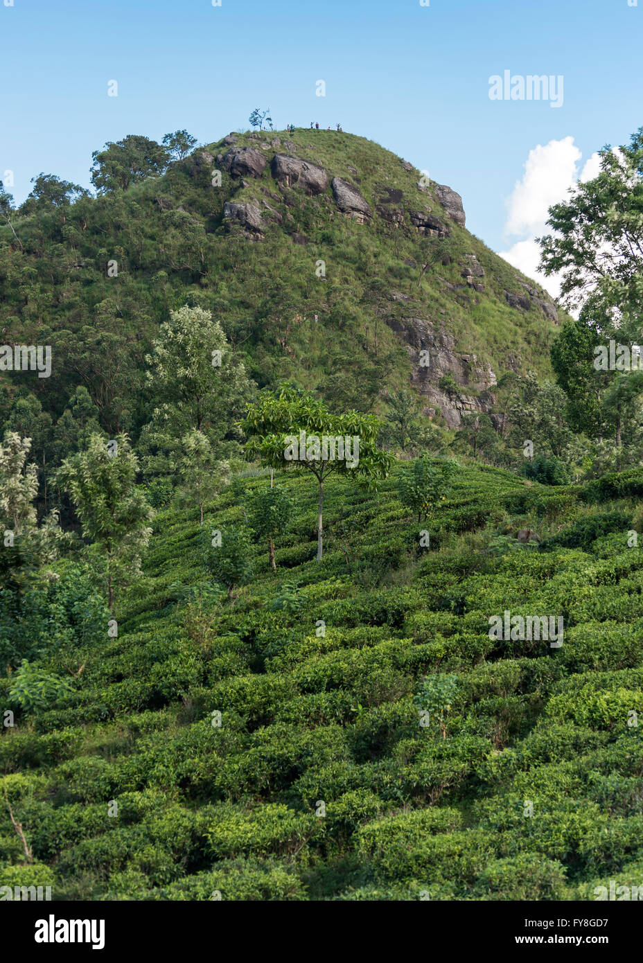 Little Adam's Peak and tea plantations, Ella, Sri Lanka Stock Photo