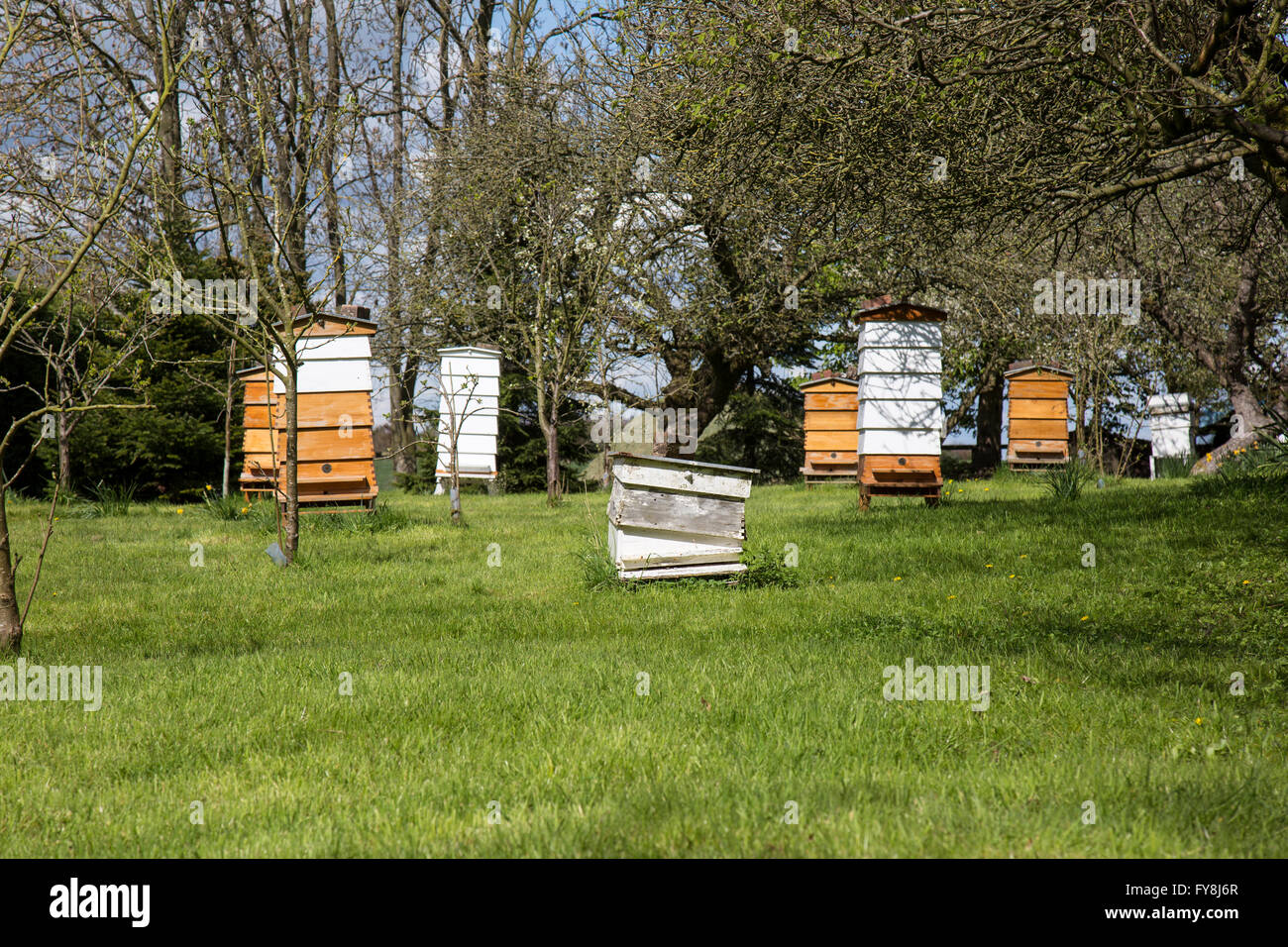 Beehives in an English country garden. - Stock Image