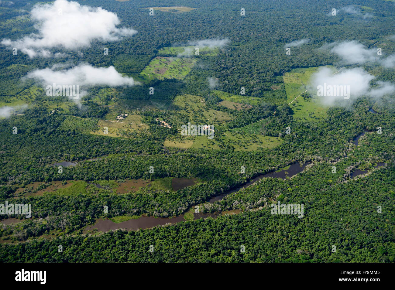 Brazil, Para, Itaituba, Amazon rainforest, slash and burn, reclamation of pastureland - Stock Image
