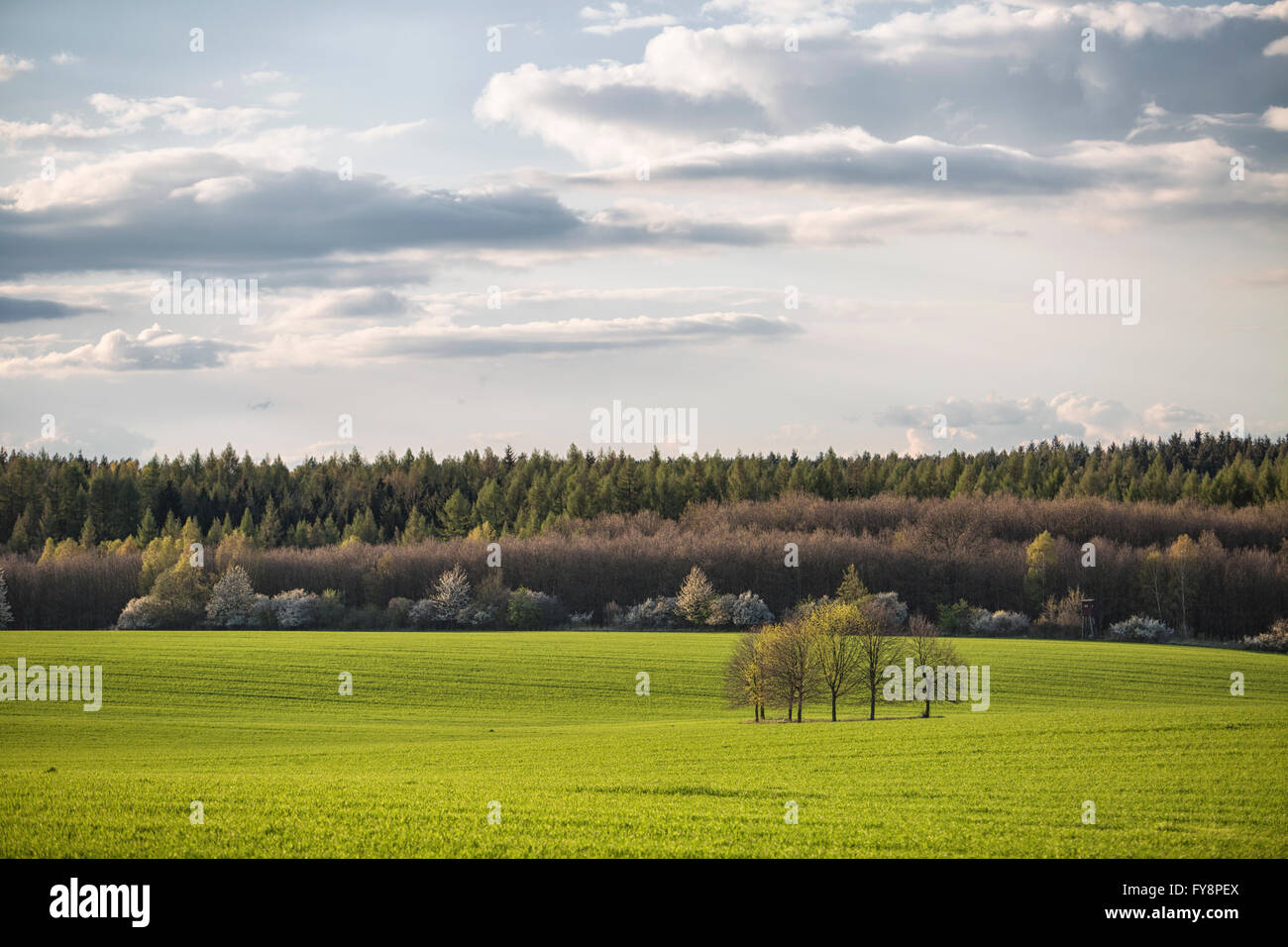 Germany, Brandenburg, Flaeming, field and group of trees, evening light - Stock Image