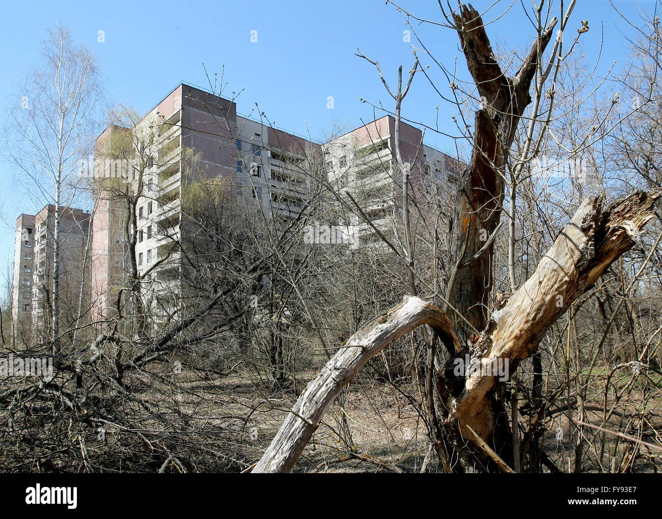 PRIPYAT, UKRAINE. Pictured in this file image is a block of flats in the abandoned town of Pripyat near the Chernobyl - Stock Image