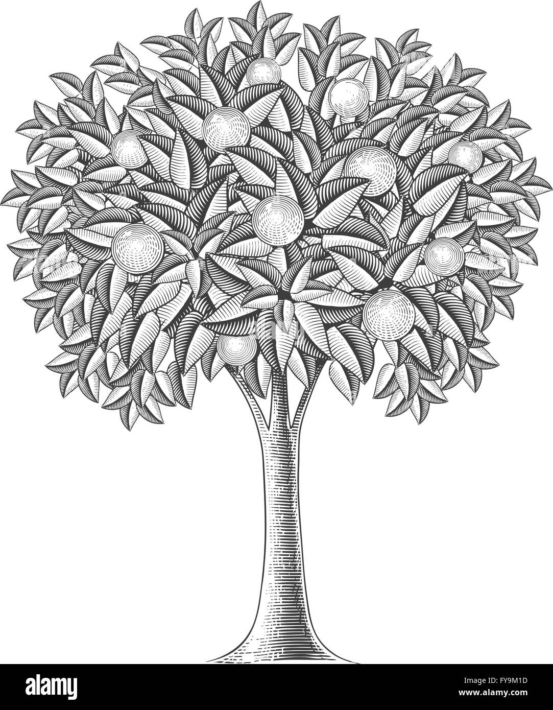 Fruit tree in engraving style - Stock Vector