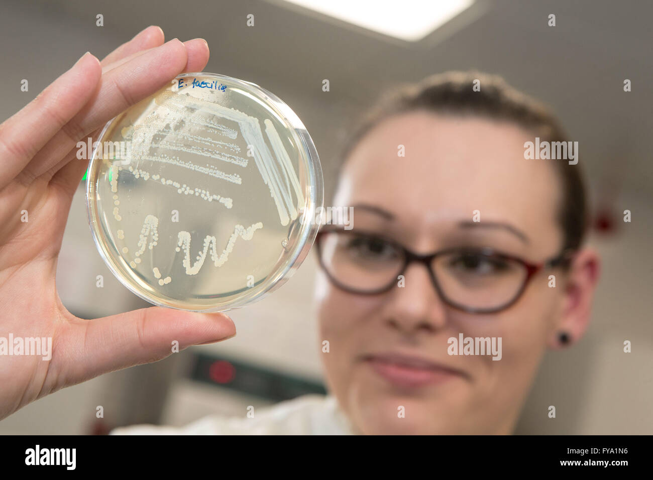 Microbiology samples  on petri dishes - Stock Image