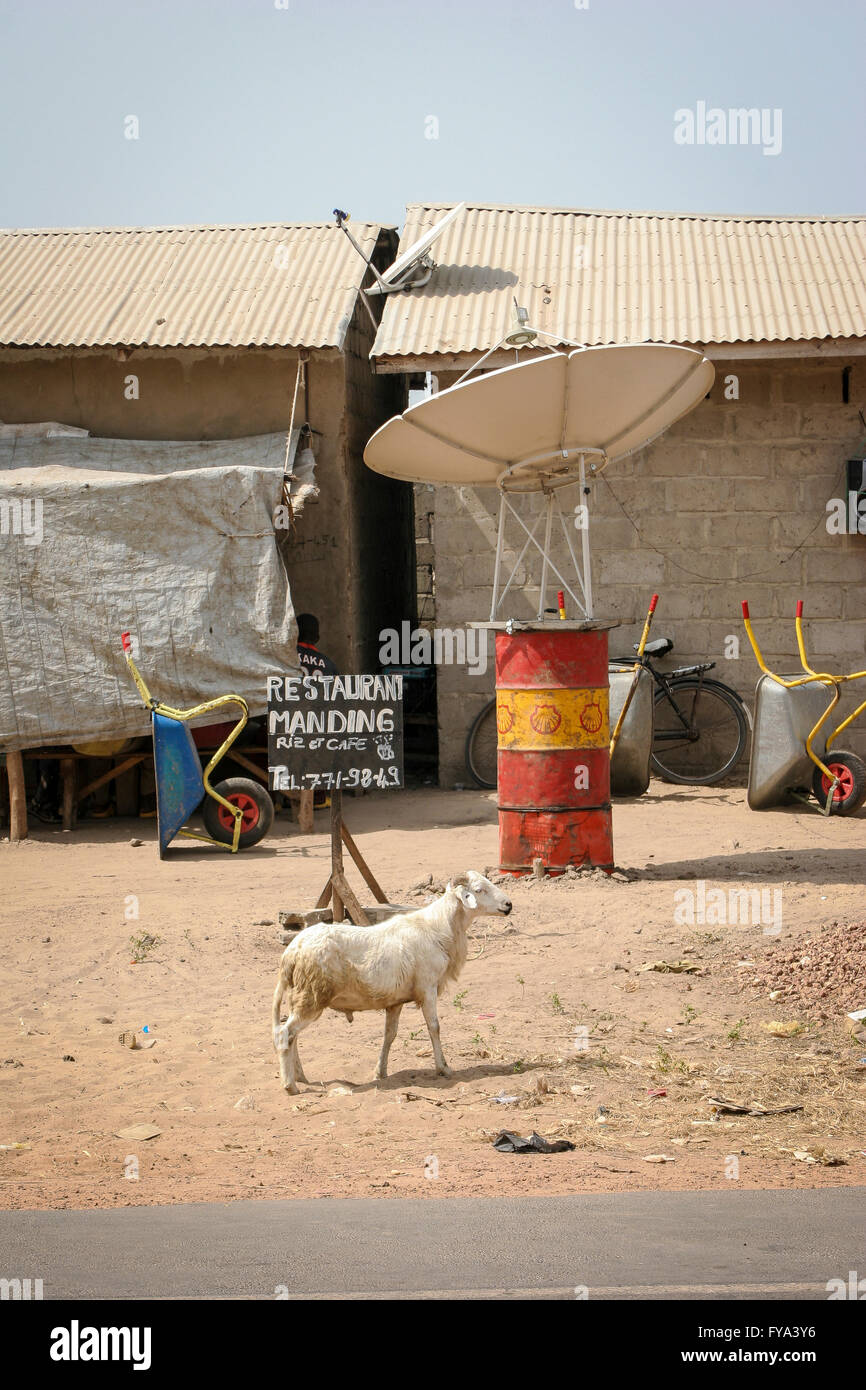 goat in front of a shanty with a satellite antenna on a barrel at Tanji village, Gambia, Africa Stock Photo