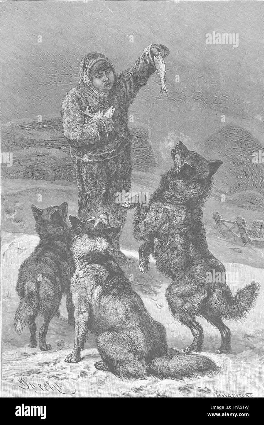 Franklin DOGS HMS Enterprise Daddy antique print Eskimo dog 1856