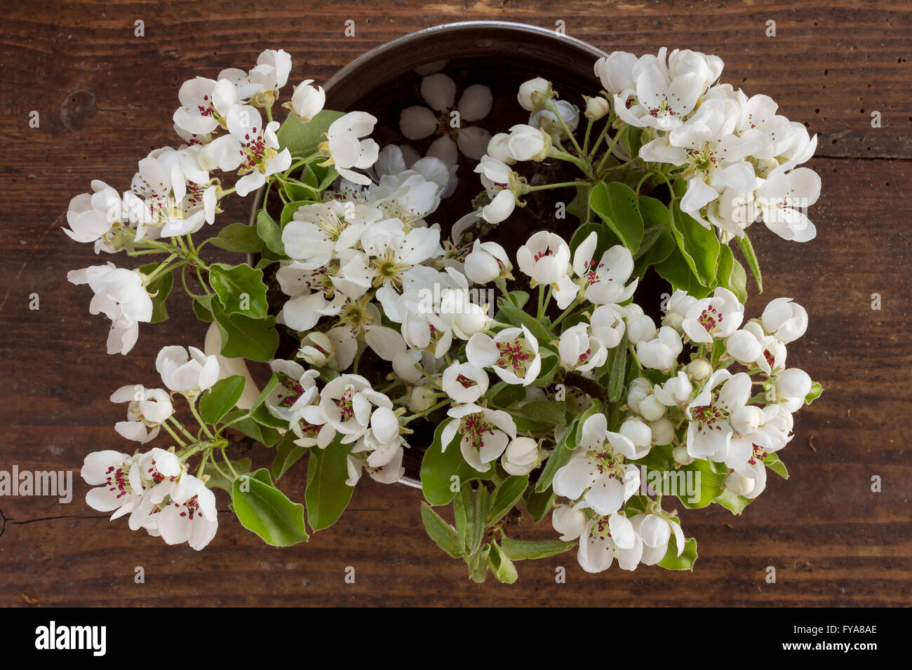 Fresh Branches Of An Apple Tree With White Flowers And Fresh Green